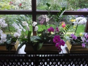 Glass Greenhouse with Orchids
