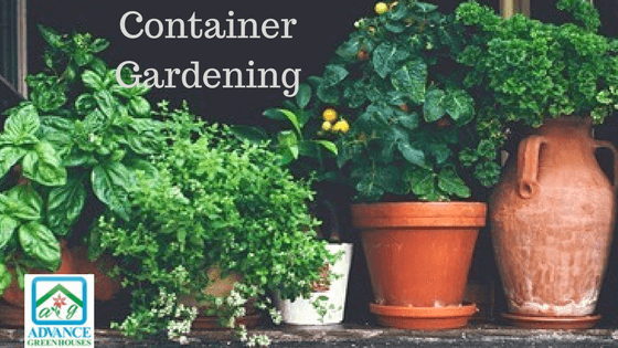 Grow Your own Veggies in Containers