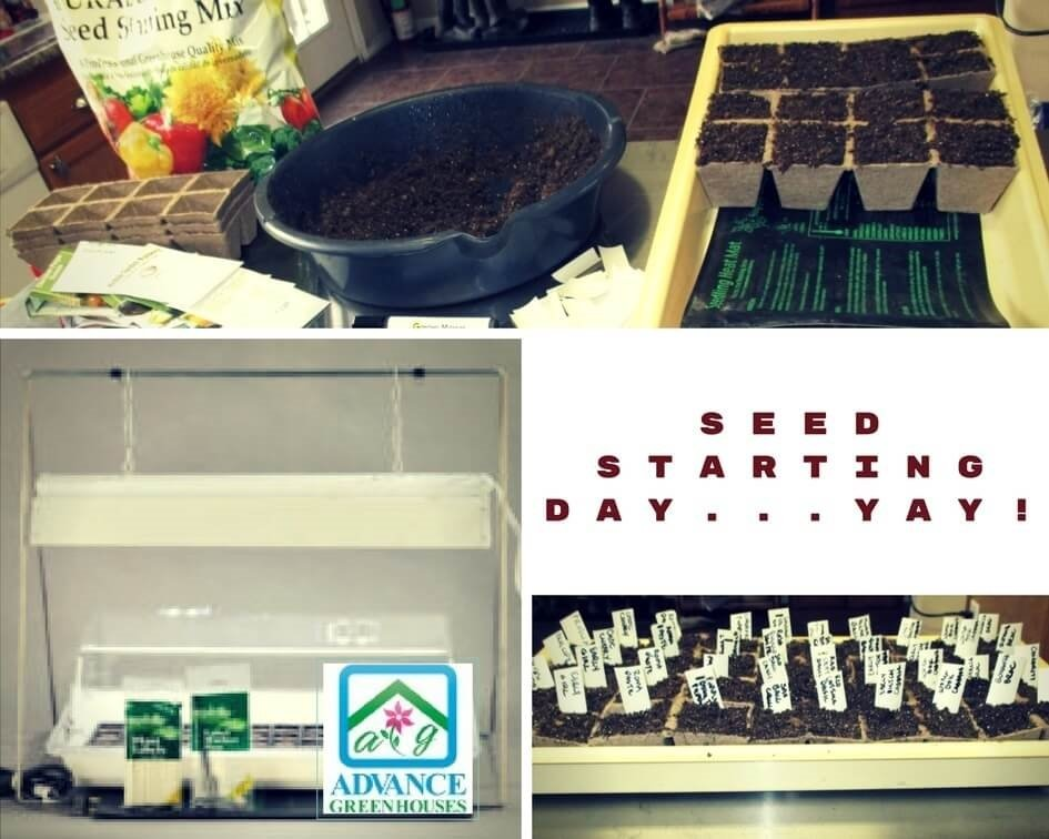 Start Your Own Seeds for Your Garden