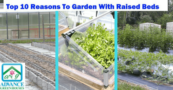 Top 10 Reasons to Garden with Raised Beds